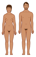Human body features.svg