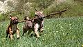 Hunde 2013-05-05-2809 (crop).jpg