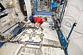 ISS-20 Robert Thirsk at the Minus Eighty Degree Laboratory Freezer.jpg