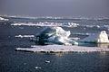 Ice in the East Siberian Sea (RAS NOAA RUSALCA 2009).jpg