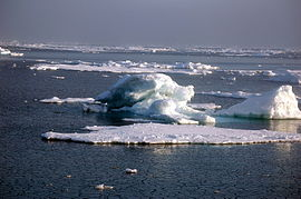 Ice in the East Siberian Sea (RAS NOAA RUSALCA 2009).jpg