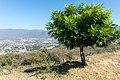 Iguala view - panoramio (1).jpg