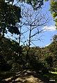 Iguape - SP - panoramio (289).jpg