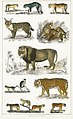 Illustration from A History of the Earth and Animated Nature by Oliver Goldsmith from rawpixel's own original edition of the publication 00082.jpg