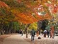 Inokashira Park PC053212.jpg