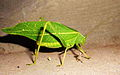 Insect by Hrushikesh Kulkarni.jpg