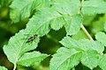 Insecte indéterminé - 2.jpg