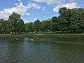 Inselsee im Rosensteinpark.jpg