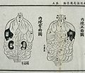 Internal organs, from the Daoist Canon, 15th century Chinese Wellcome L0034716.jpg