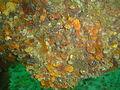 Invertebrate encrustation on the Pietermaritzburg DSC00818.JPG