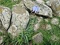 Iris waterfall3286.JPG