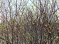 Irkutsk. Akademgorodok. Spring - panoramio (3).jpg