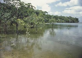 Image illustrative de l'article Río Caquetá