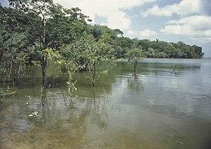 Purus várzea - Japurá River