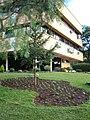 Jardim da Prefeitura - panoramio.jpg