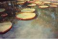 Jardin de Pamplemousses (3002662226).jpg