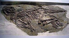 Het holotype van Jinzhousaurus yangi