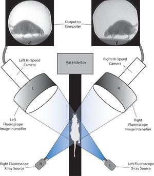 X-ray motion analysis - Image: Journal.pone.0149377 .g 001