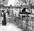 Julia Fons y el avestruz.jpg