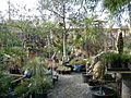 Jungle Fever Exotics Nursery.jpg