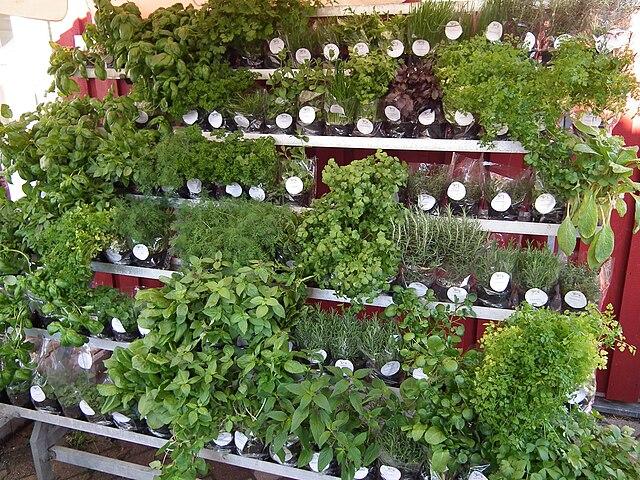 Liečivé byliny môžeme pestovať aj doma