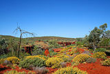 The vibrant colours of the outback in Karijini National Park