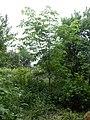 Kastanien - panoramio.jpg