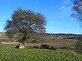 Ken-Dee Farmland - geograph.org.uk - 321902.jpg