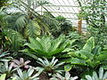 Kew Gardens - London - September 2008 (2954898061).jpg