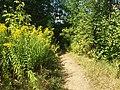 Kharkiv Botanical Garden 06.jpg