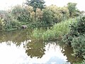 Kincaple Pond - geograph.org.uk - 48166.jpg