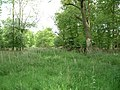 Kingshoe Wood - geograph.org.uk - 171929.jpg