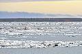 Kotelny-Insel 1 2014-08-24.jpg