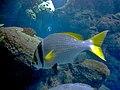 Kuwait scientific centre aqarium views (18).jpg