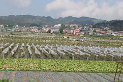 La Trinidad strawberry fields