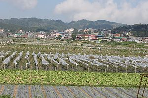 La Trinidad, Benguet - La Trinidad strawberry fields