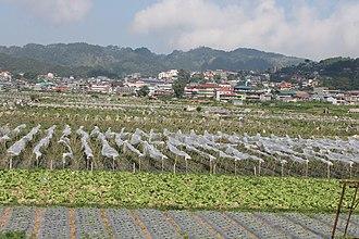 La Trinidad, Benguet - La Trinidad strawberry fields