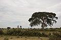 Landscape with Tree (5072921686).jpg