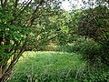 Landschaftsschutzgebiet Wäldchen bei Buer Melle Datei 5.jpg