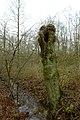Landschap De Stroopers te Kemzeke - 372158 - onroerenderfgoed.jpg
