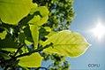 Leafunderthesun.jpg