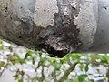 Leak in rusted pipe side view.jpg