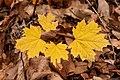 Leaves (213110565).jpeg