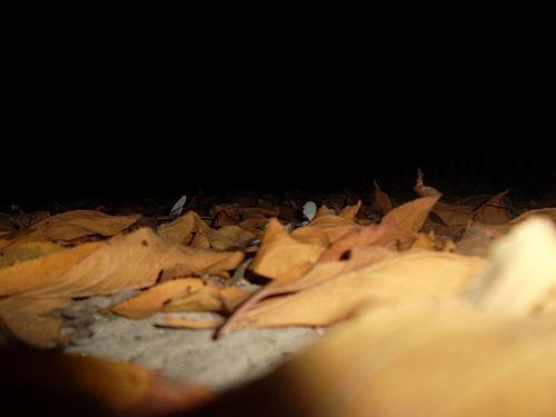 Leaves 10.JPG