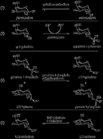 UDP-glucose 4-epimerase - Image: Leloir pathway