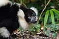 Lemur (25081941267).jpg