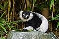 Lemur (36710138831).jpg