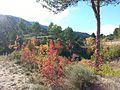 Les Llacunes - panoramio.jpg