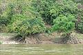 Les rives du Mékong durant la saison sèche (Laos) (4330579882).jpg