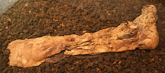 Lindow Man - Lindow Man's right foot